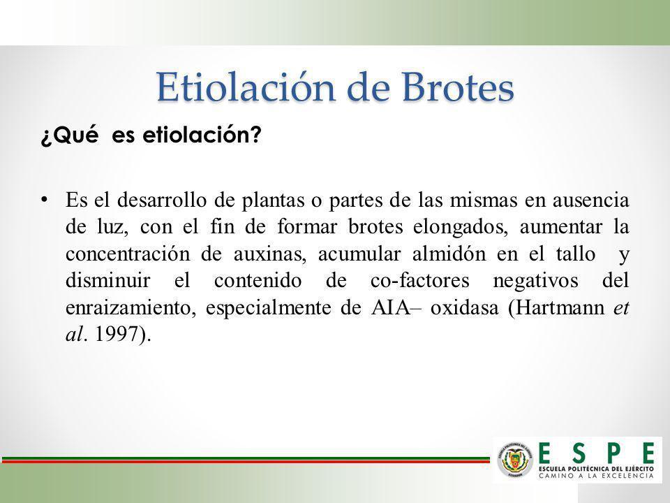 Etiolación de Brotes ¿Qué es etiolación