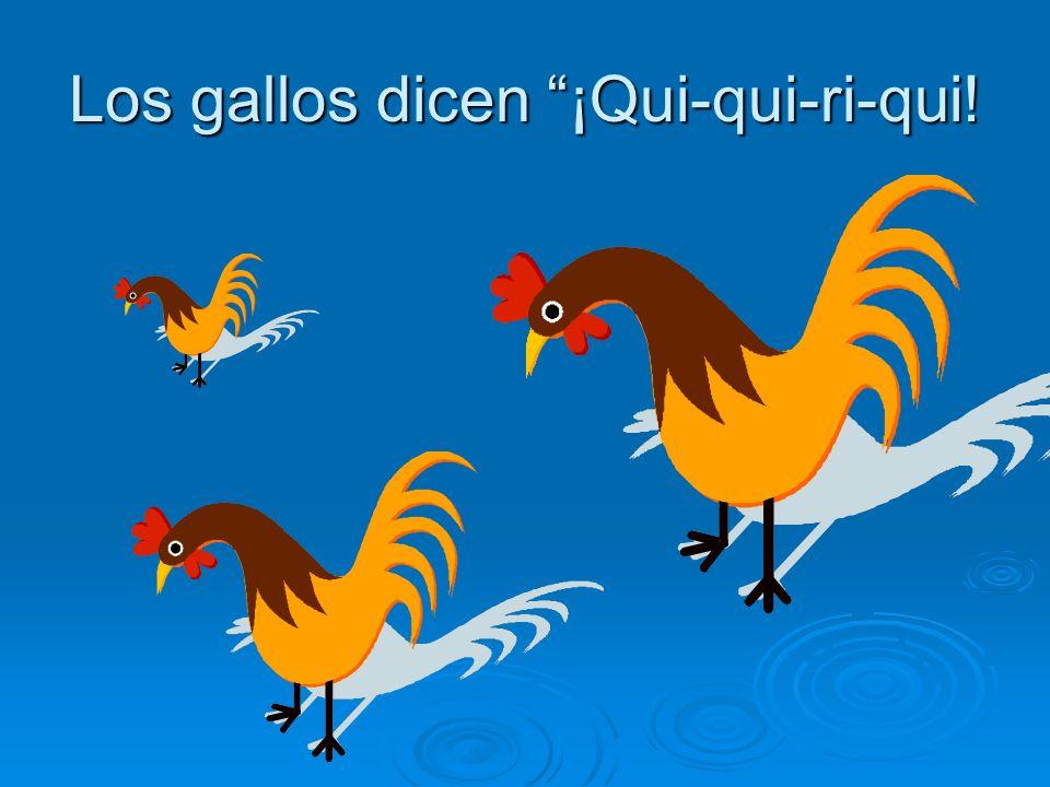 Los gallos dicen ¡Qui-qui-ri-qui!