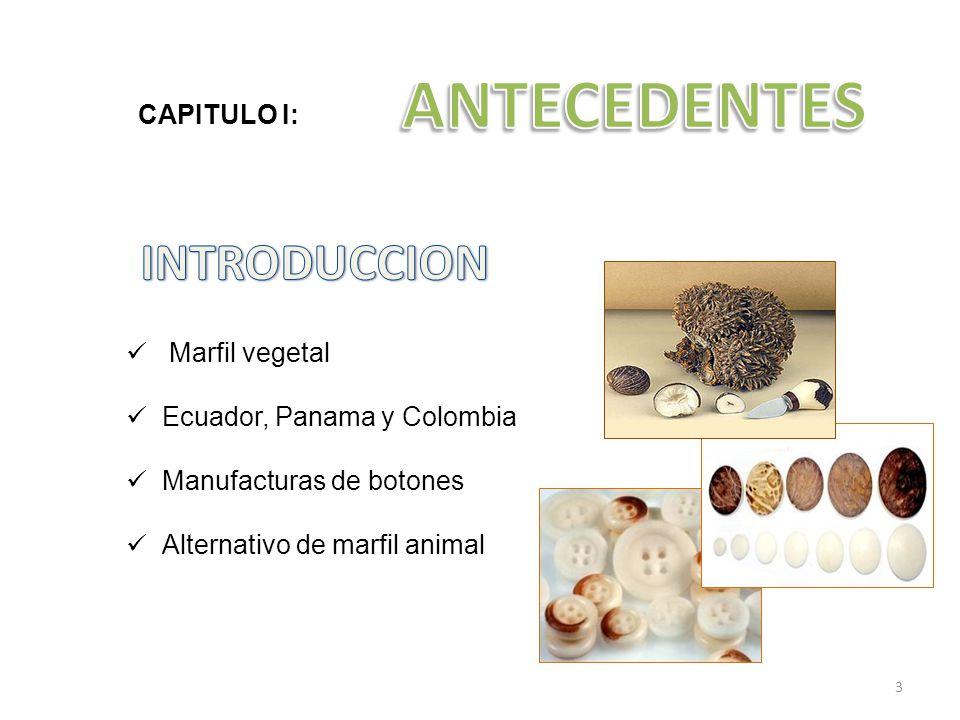 ANTECEDENTES INTRODUCCION CAPITULO I: Marfil vegetal