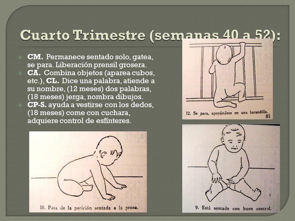 Cuarto Trimestre (semanas 40 a 52):