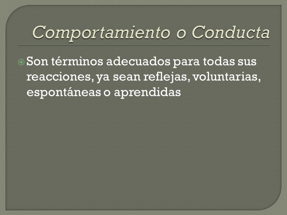 Comportamiento o Conducta