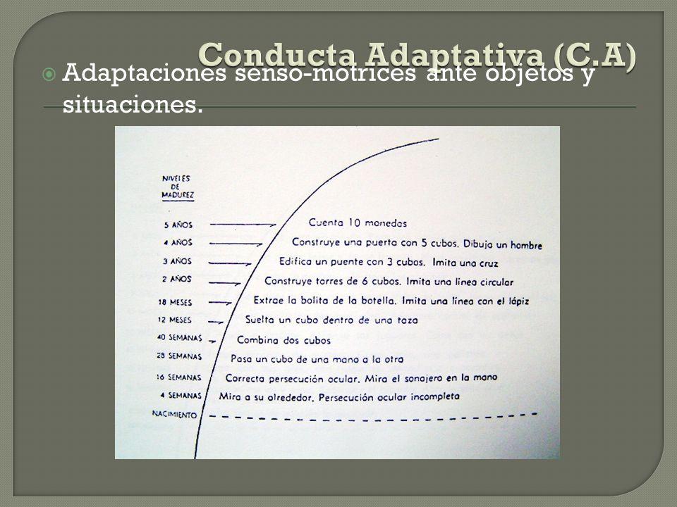 Conducta Adaptativa (C.A)
