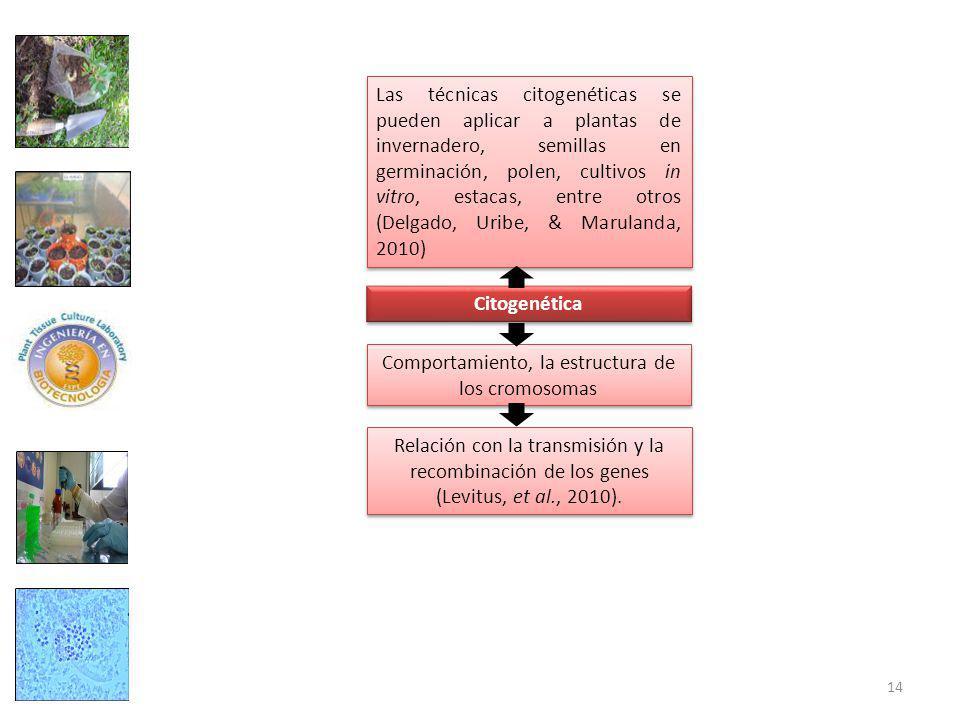Comportamiento, la estructura de los cromosomas