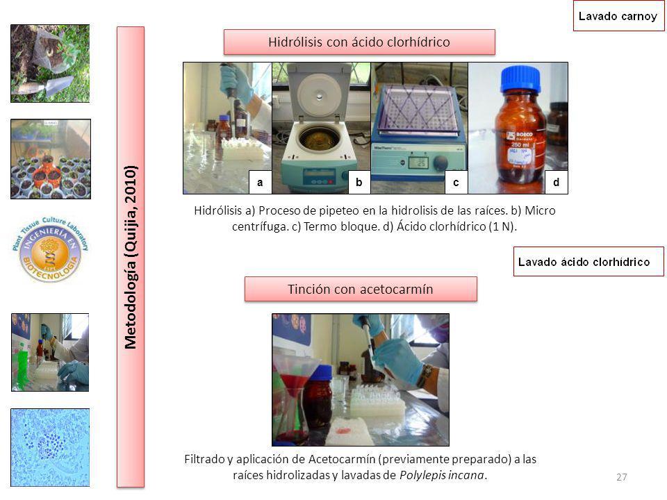 Metodología (Quijia, 2010) Hidrólisis con ácido clorhídrico