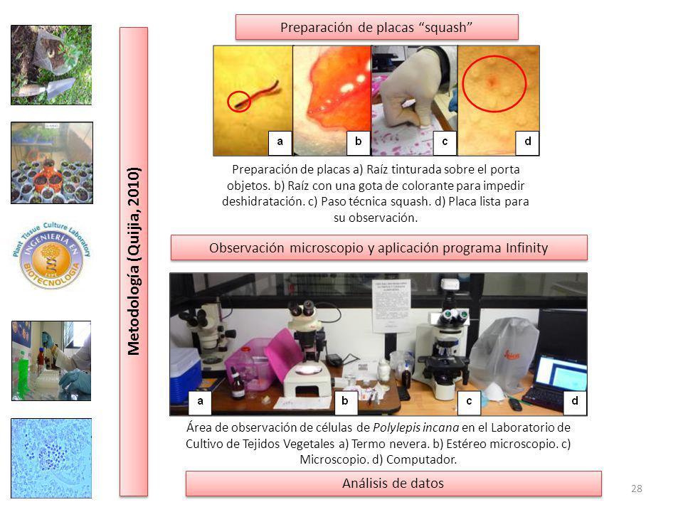 Metodología (Quijia, 2010) Preparación de placas squash
