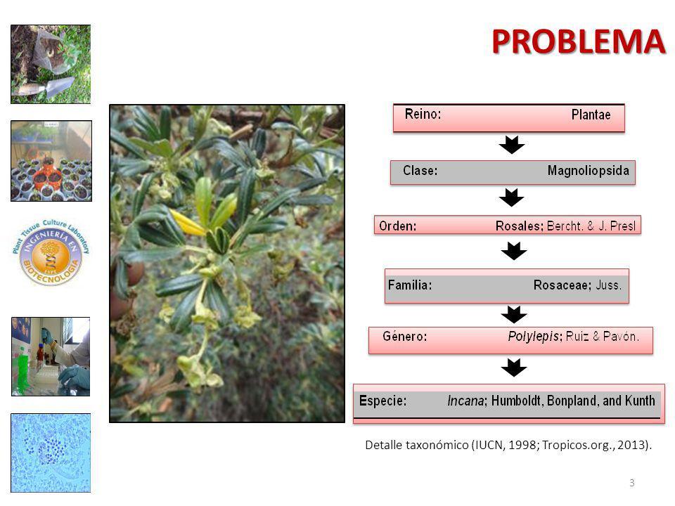 Detalle taxonómico (IUCN, 1998; Tropicos.org., 2013).
