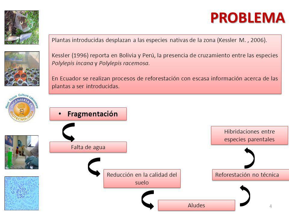 PROBLEMA Fragmentación