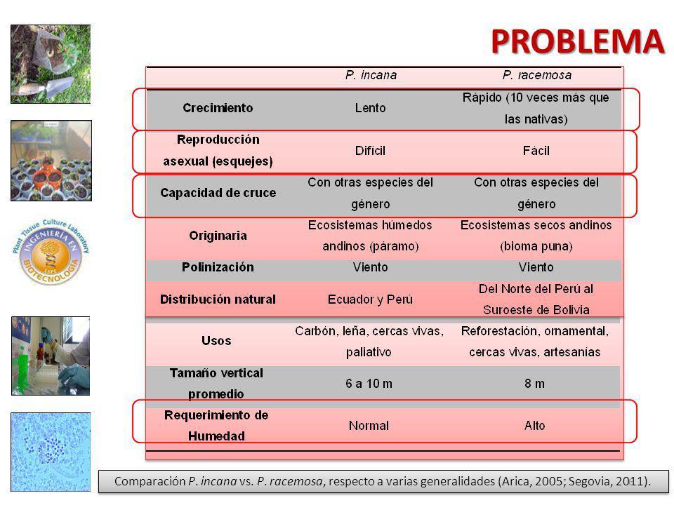 PROBLEMA Comparación P. incana vs. P.