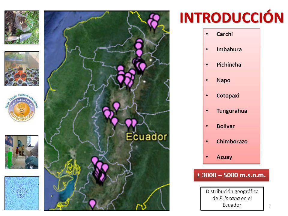 Distribución geográfica de P. incana en el Ecuador