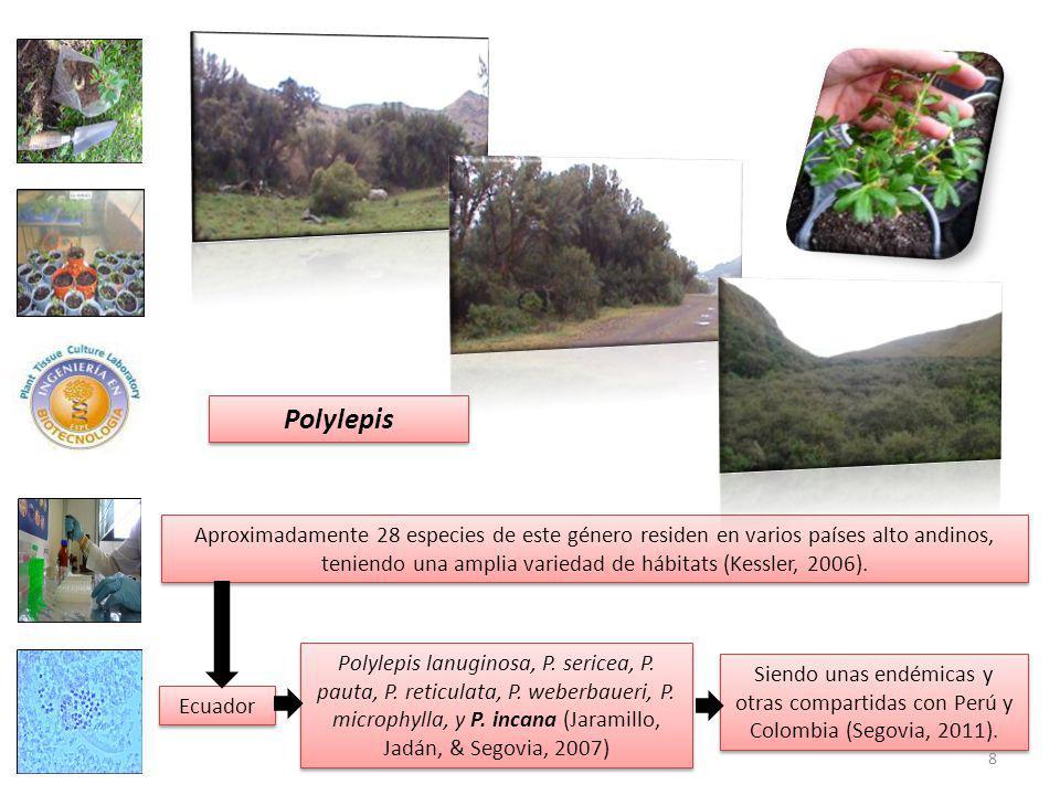 Polylepis Aproximadamente 28 especies de este género residen en varios países alto andinos, teniendo una amplia variedad de hábitats (Kessler, 2006).