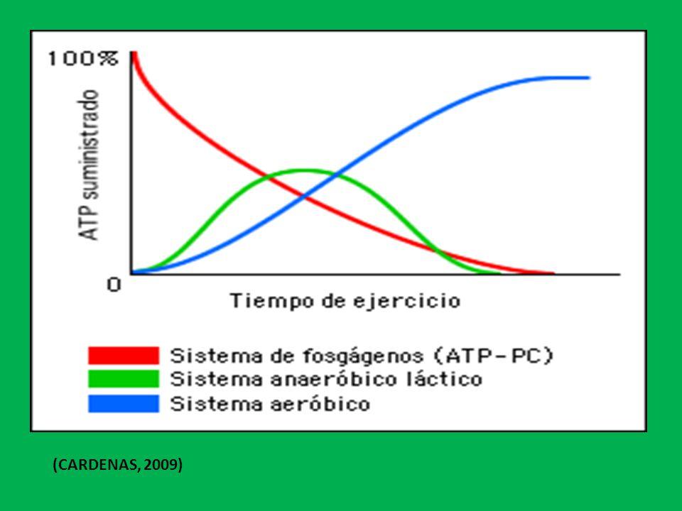 (CARDENAS, 2009)