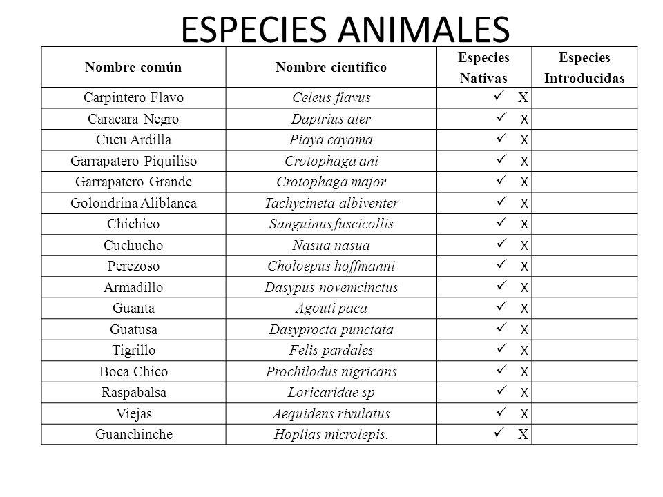 ESPECIES ANIMALES Nombre común Nombre cientifico Especies Nativas