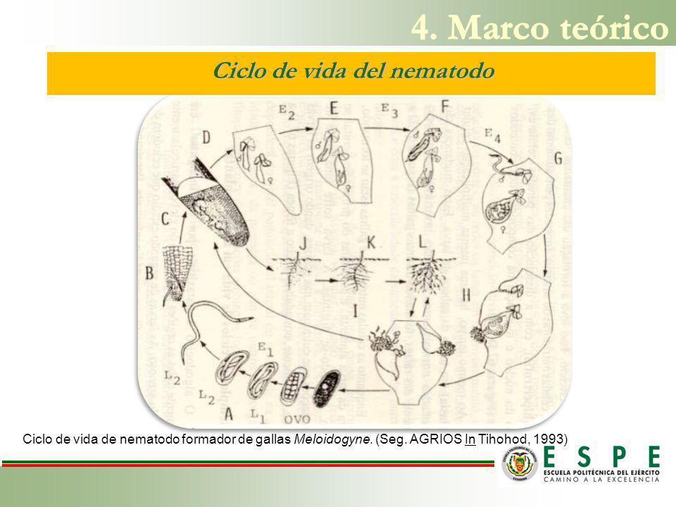 Ciclo de vida del nematodo