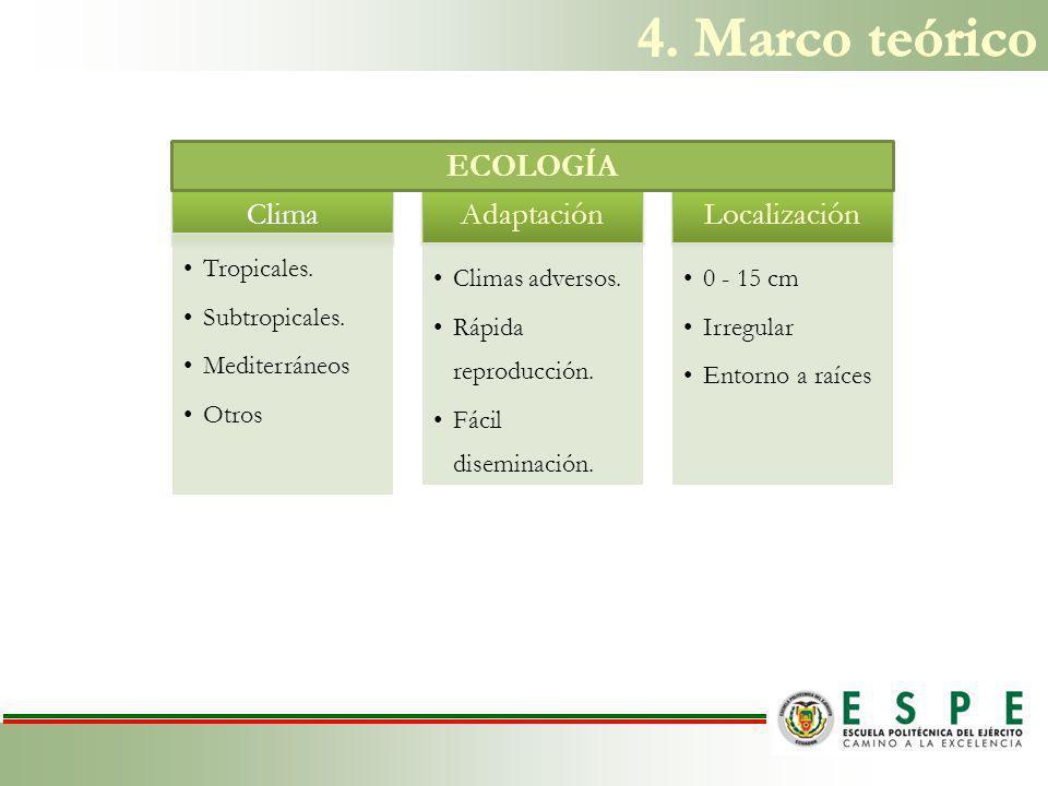 4. Marco teórico ECOLOGÍA Clima Adaptación Localización Tropicales.