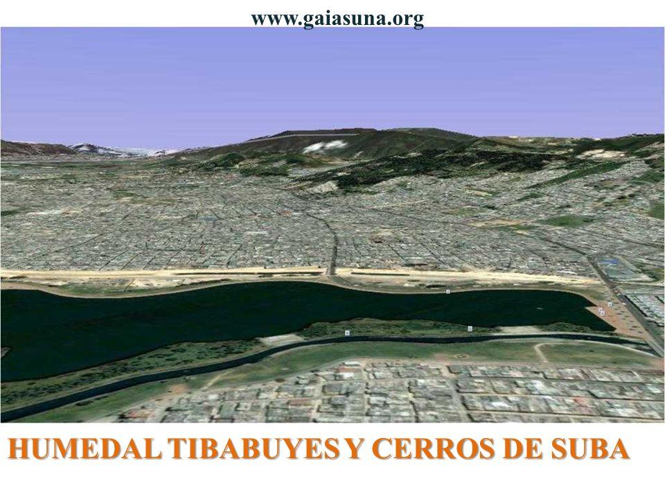 HUMEDAL TIBABUYES Y CERROS DE SUBA