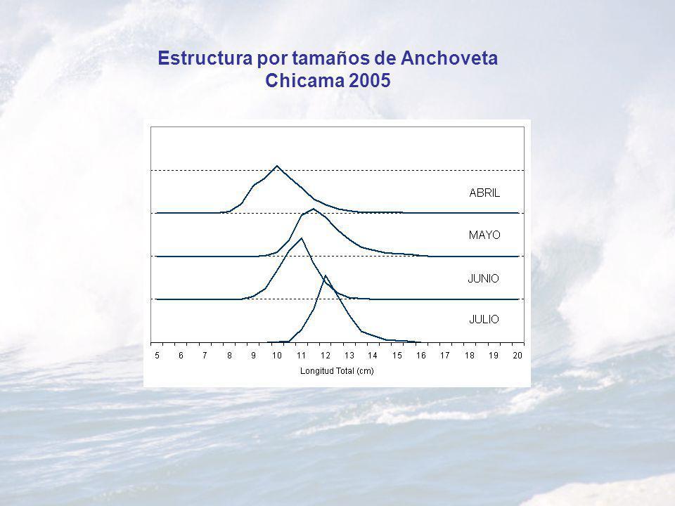 Estructura por tamaños de Anchoveta