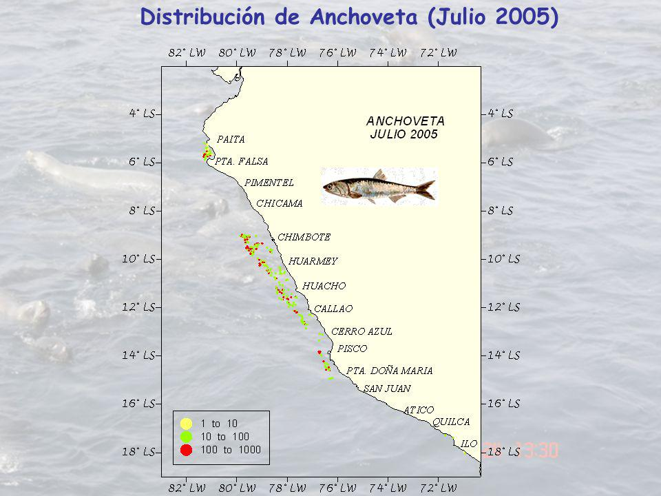 Distribución de Anchoveta (Julio 2005)