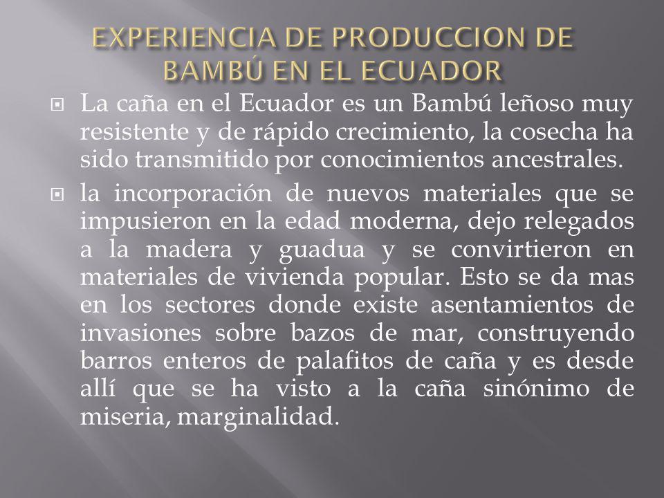 EXPERIENCIA DE PRODUCCION DE BAMBÚ EN EL ECUADOR