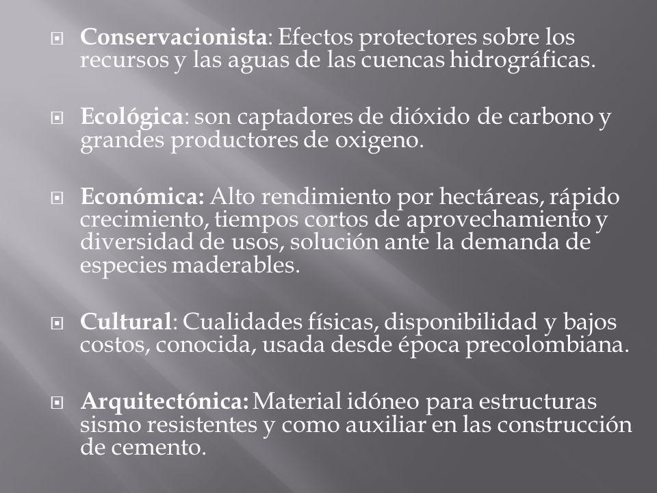 Conservacionista: Efectos protectores sobre los recursos y las aguas de las cuencas hidrográficas.
