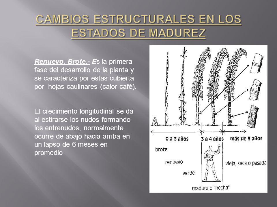 CAMBIOS ESTRUCTURALES EN LOS ESTADOS DE MADUREZ