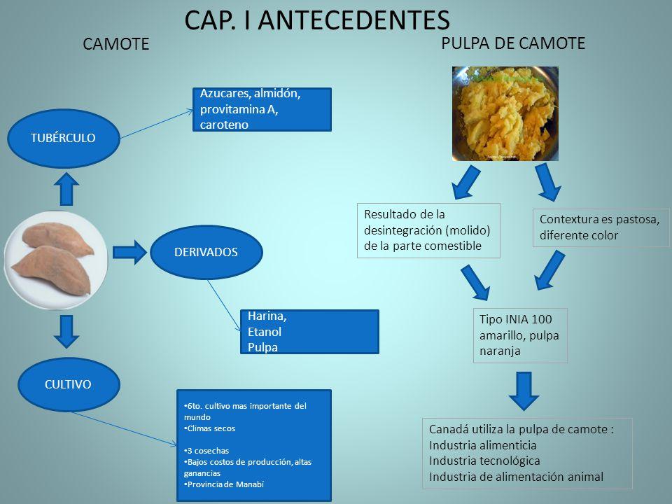 CAP. I ANTECEDENTES CAMOTE PULPA DE CAMOTE