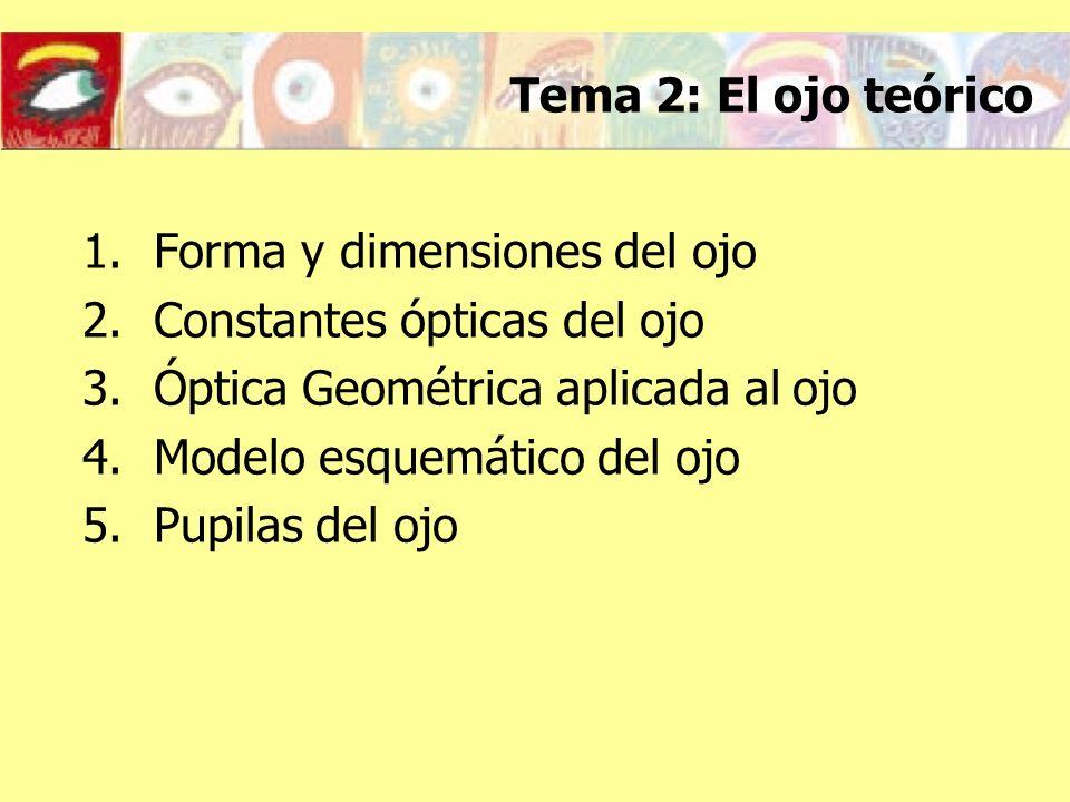 Forma y dimensiones del ojo Constantes ópticas del ojo