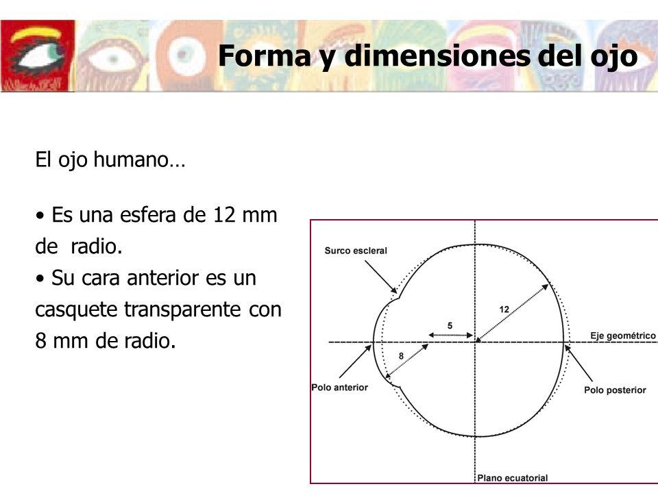 Forma y dimensiones del ojo