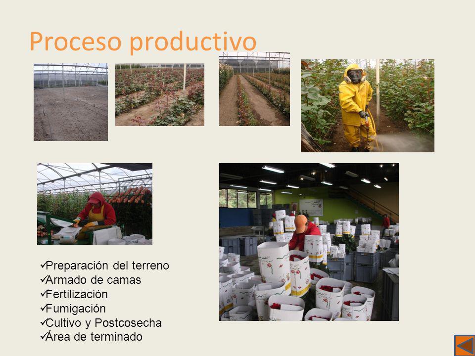 Proceso productivo Preparación del terreno Armado de camas