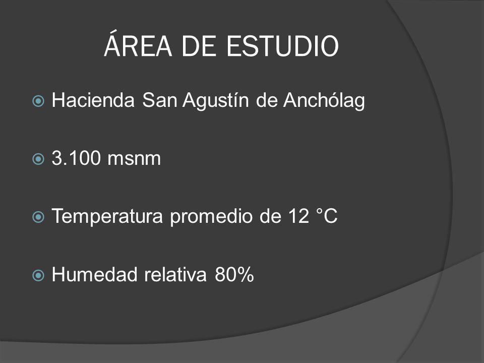 ÁREA DE ESTUDIO Hacienda San Agustín de Anchólag 3.100 msnm