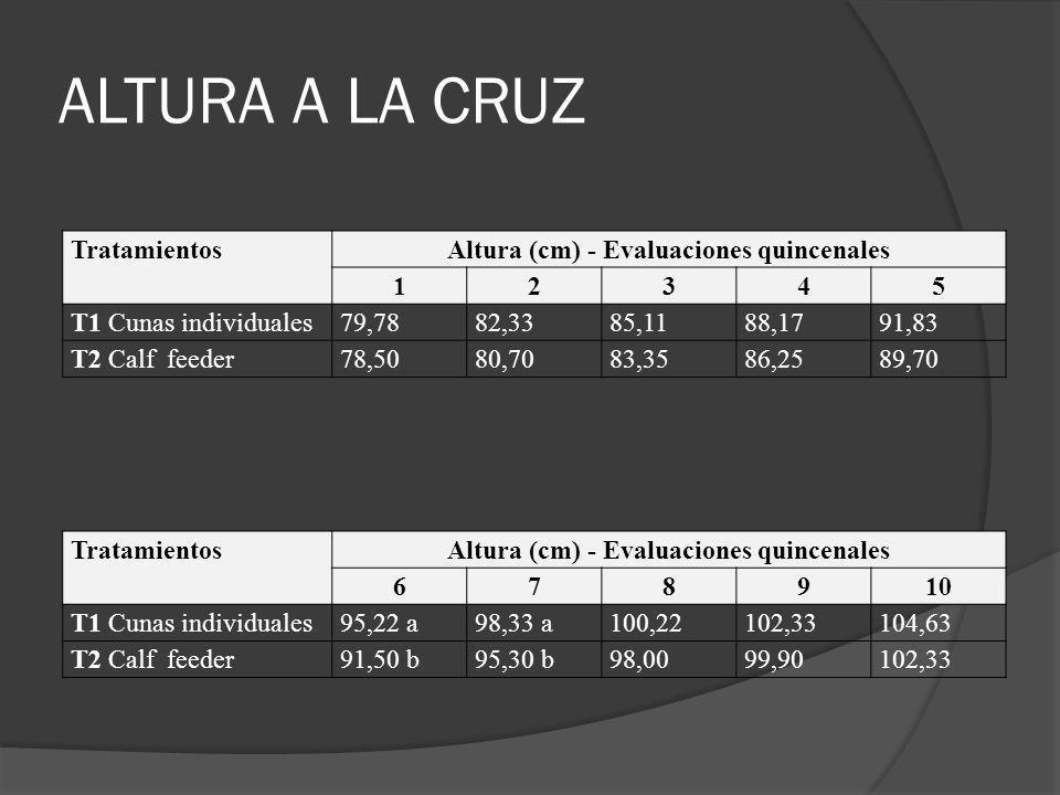 ALTURA A LA CRUZ Tratamientos Altura (cm) - Evaluaciones quincenales 1
