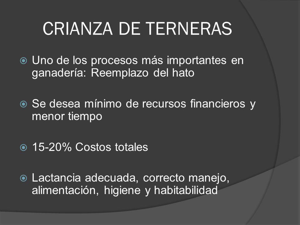 CRIANZA DE TERNERAS Uno de los procesos más importantes en ganadería: Reemplazo del hato. Se desea mínimo de recursos financieros y menor tiempo.