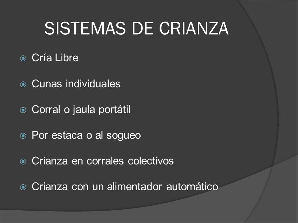 SISTEMAS DE CRIANZA Cría Libre Cunas individuales