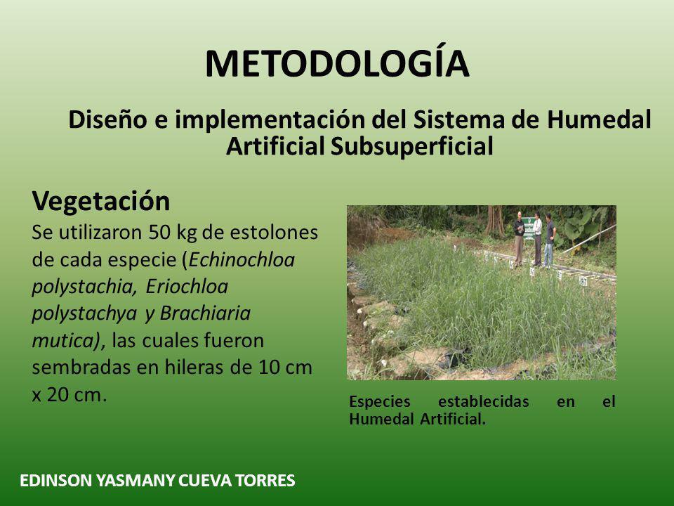 METODOLOGÍA Vegetación