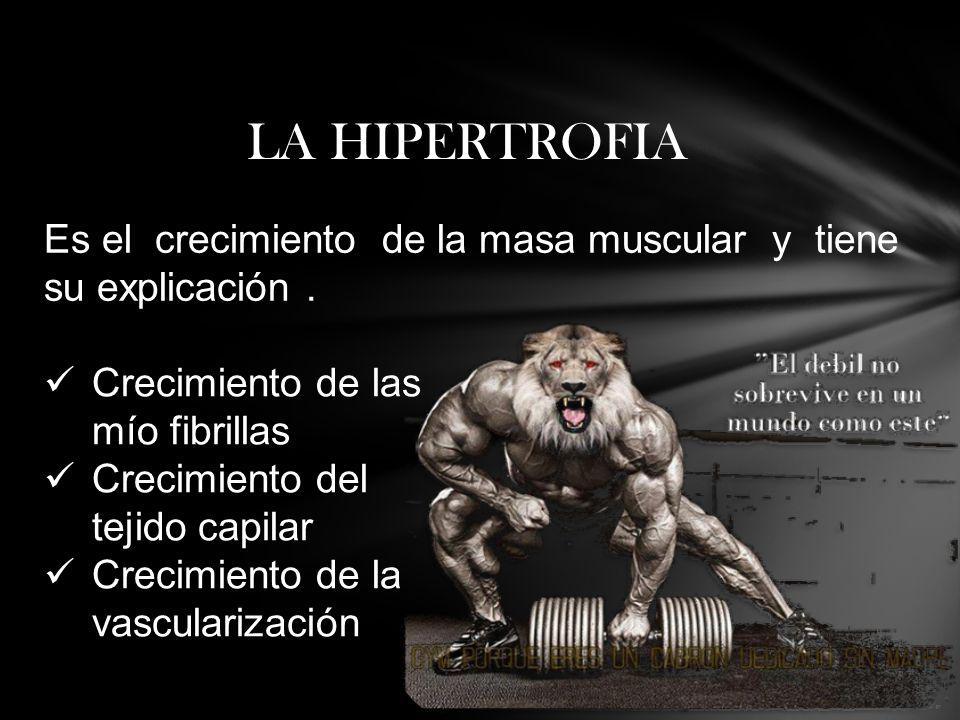 LA HIPERTROFIA Es el crecimiento de la masa muscular y tiene su explicación . Crecimiento de las mío fibrillas.