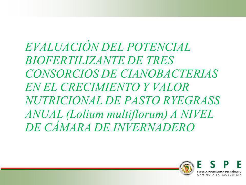 EVALUACIÓN DEL POTENCIAL BIOFERTILIZANTE DE TRES CONSORCIOS DE CIANOBACTERIAS EN EL CRECIMIENTO Y VALOR NUTRICIONAL DE PASTO RYEGRASS ANUAL (Lolium multiflorum) A NIVEL DE CÁMARA DE INVERNADERO
