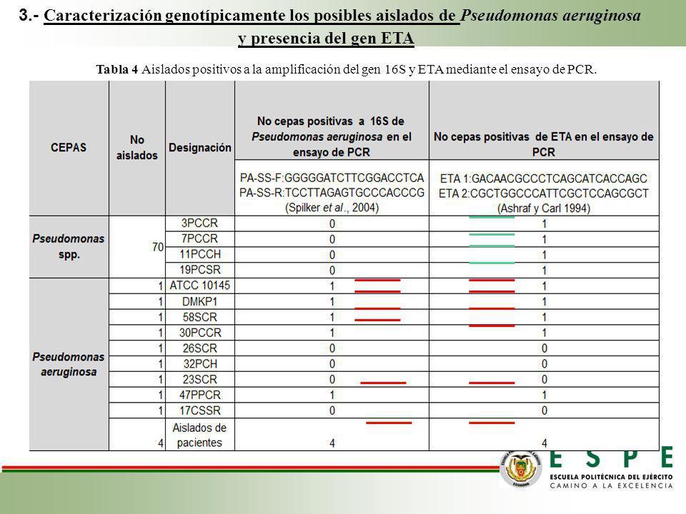 3.- Caracterización genotípicamente los posibles aislados de Pseudomonas aeruginosa y presencia del gen ETA