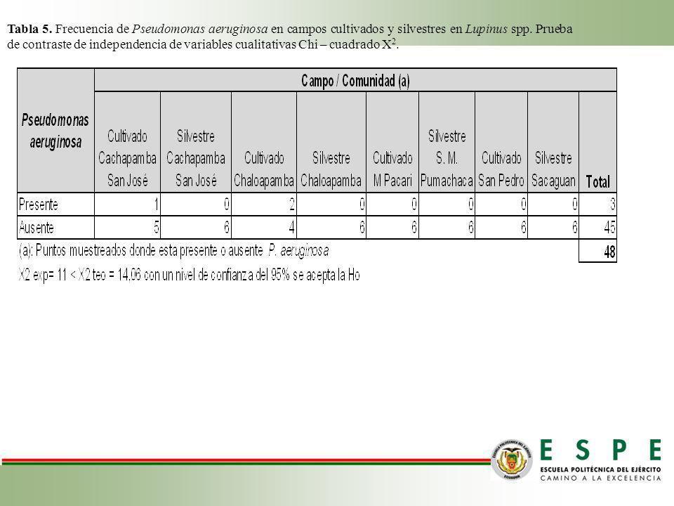 Tabla 5. Frecuencia de Pseudomonas aeruginosa en campos cultivados y silvestres en Lupinus spp.