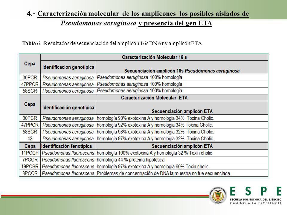 4.- Caracterización molecular de los amplicones los posibles aislados de Pseudomonas aeruginosa y presencia del gen ETA