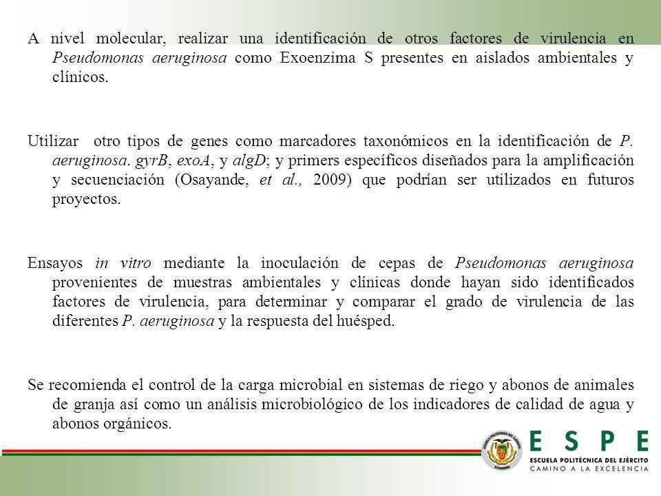A nivel molecular, realizar una identificación de otros factores de virulencia en Pseudomonas aeruginosa como Exoenzima S presentes en aislados ambientales y clínicos.