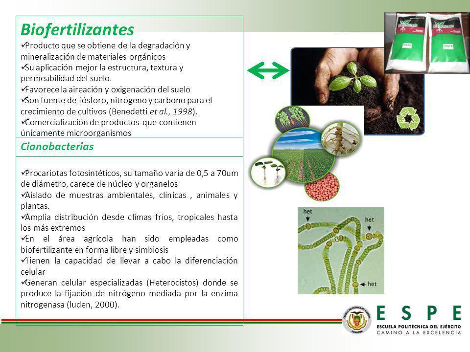 Biofertilizantes Cianobacterias