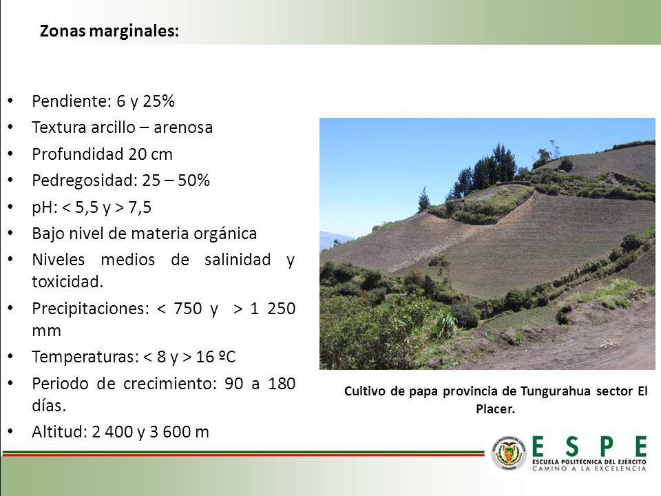 Cultivo de papa provincia de Tungurahua sector El Placer.