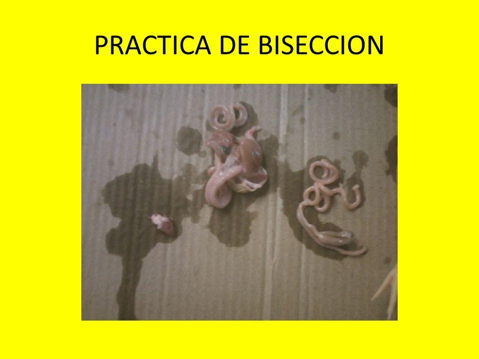 PRACTICA DE BISECCION