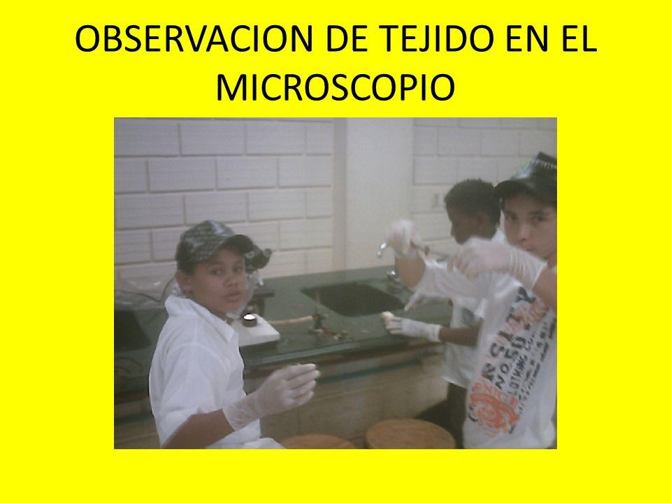 OBSERVACION DE TEJIDO EN EL MICROSCOPIO