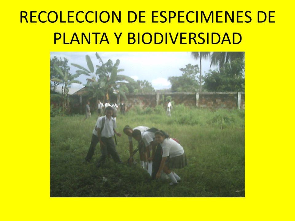 RECOLECCION DE ESPECIMENES DE PLANTA Y BIODIVERSIDAD