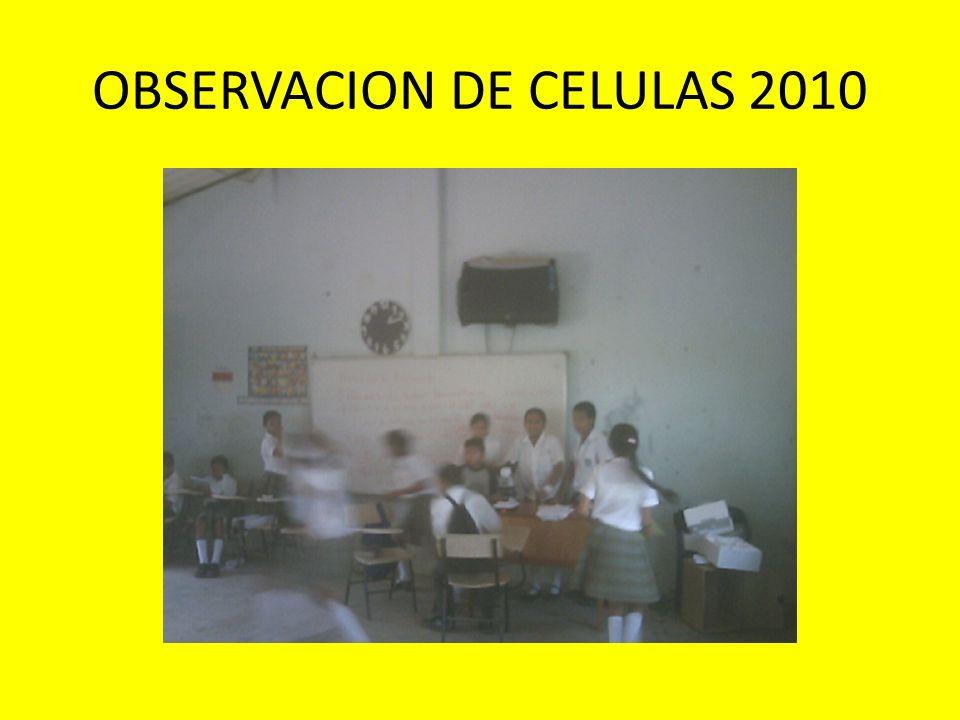 OBSERVACION DE CELULAS 2010