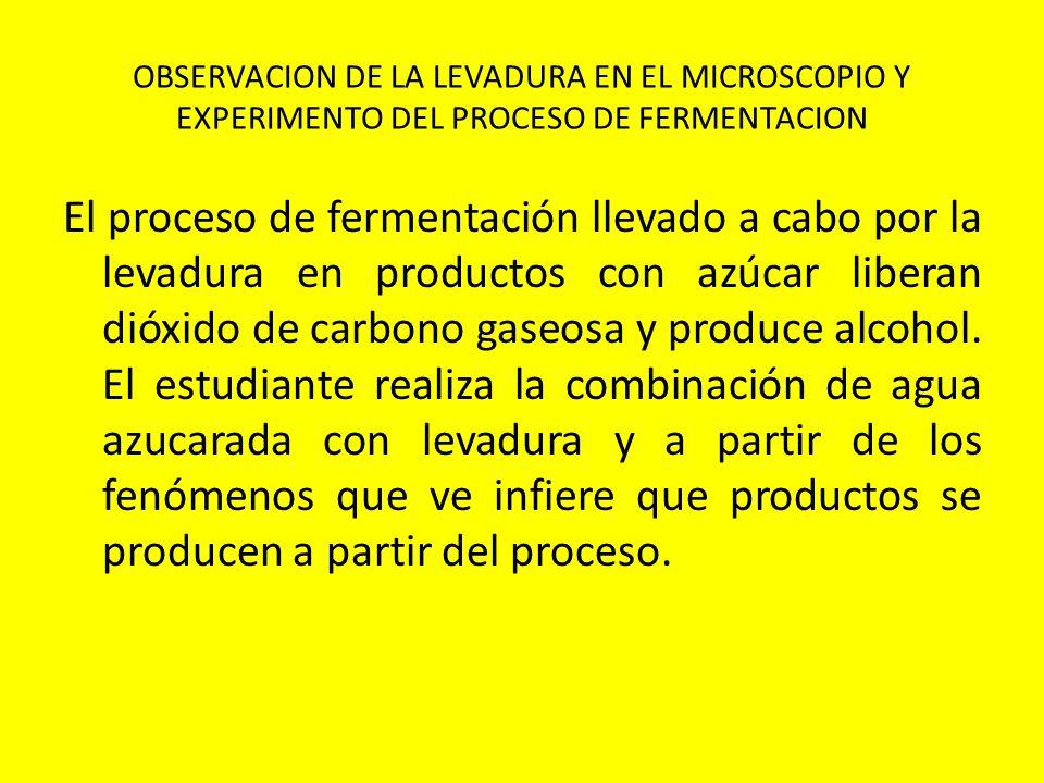 OBSERVACION DE LA LEVADURA EN EL MICROSCOPIO Y EXPERIMENTO DEL PROCESO DE FERMENTACION
