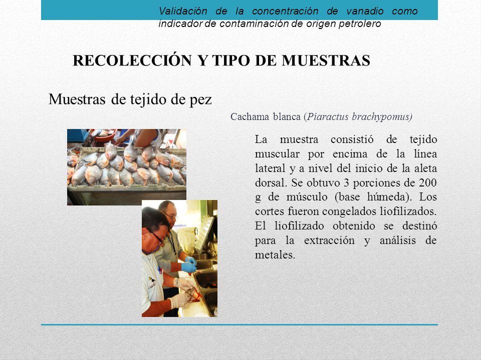 RECOLECCIÓN Y TIPO DE MUESTRAS Muestras de tejido de pez