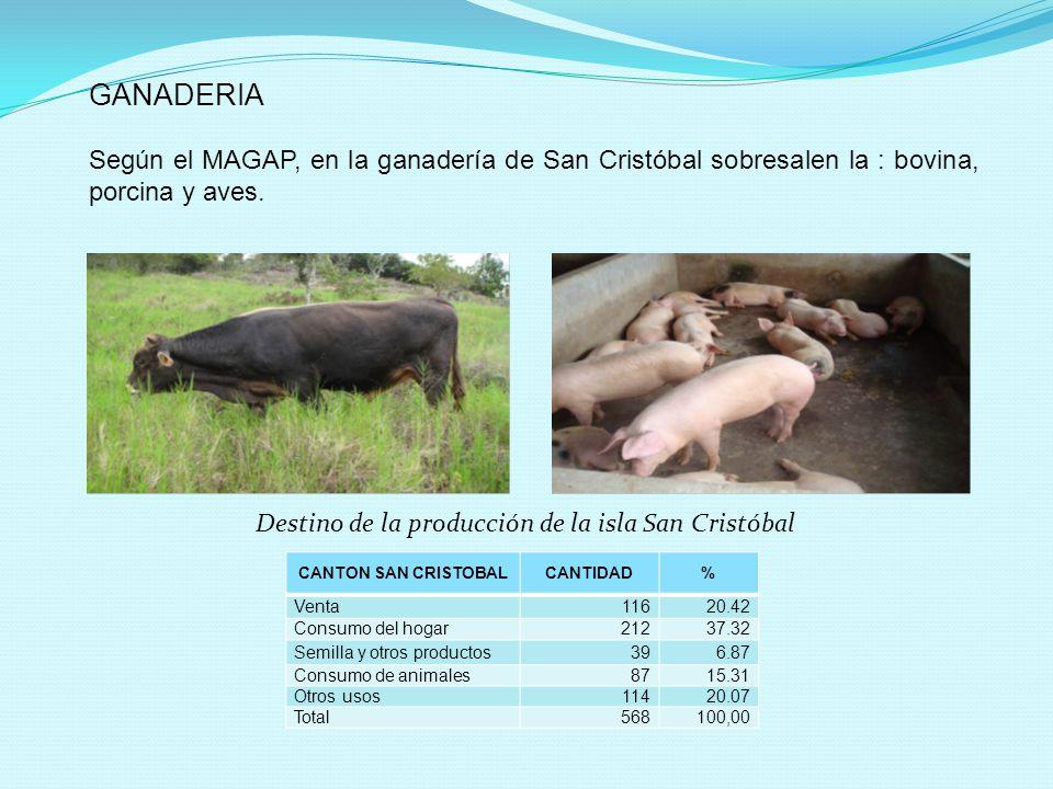 Destino de la producción de la isla San Cristóbal