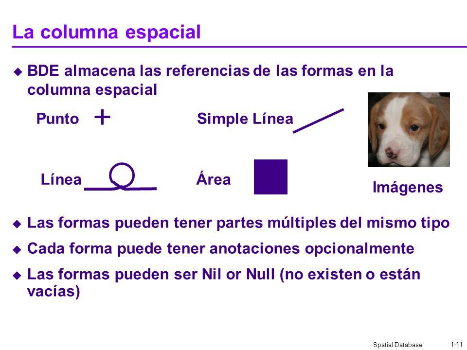 La columna espacial BDE almacena las referencias de las formas en la columna espacial. Punto. Simple Línea.