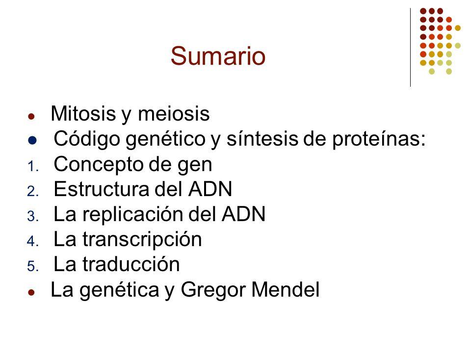 Sumario Mitosis y meiosis Código genético y síntesis de proteínas: